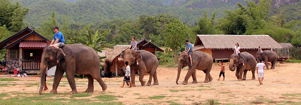 Several students riding elephants in a small village